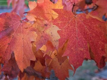 Bright Autumn--155